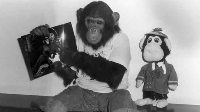 Bubbles the Chimp