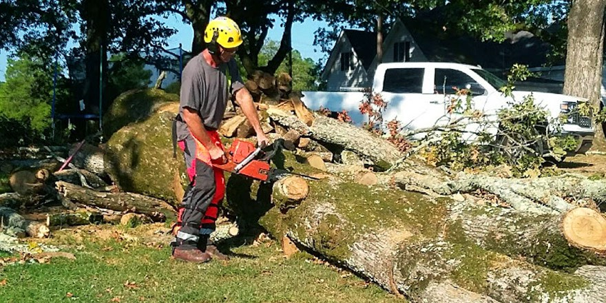 9 Questions to Ask Before Hiring a Tree Service - Verge Campus